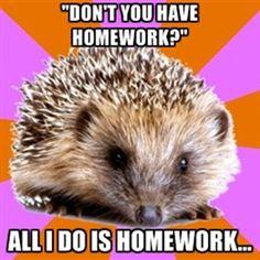 Homeschooled Hedgehog - Dont you have homework? All I do is Homework...