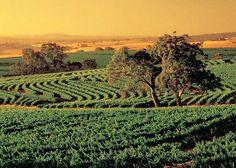 Adelaide: Barossa Valley Australia's Famous Wine Region