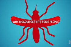 Simple Preventives on How to Avoid Mosquito Bites