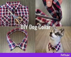 """DIY Dog Collar   Instant """"aww!"""" Trim the collar off of a child-sized button-down shirt to make a fun, fancy DIY collar accessory for your pup.   Pictorial only - no link. Found via Petfinder.com on Facebook."""