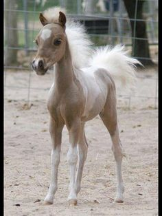 Tiny Baby Horse - with fluffy hair.