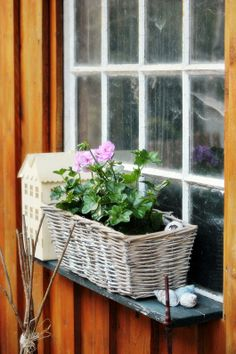 basket. Lovely idea to plants little pots of colour in,