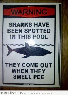 Hahaha! #HaywardPool #Sharks #Pools Where do I get one?