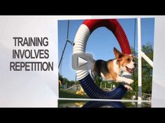 9 Tips For Dog Obedience Training - Dog Barking, Crate Training, Tricks etc -   If you want to learn how or when to start dog obedience training the above video offers great tips for the beginner. Dog training can be very easy and fun if you know the right way to do it and if the methods you use are effective.  The website above is a great place to start learning about dog training - you can get a guide there that shows you exactly what you need to start to do, and offers a lot of solutions to