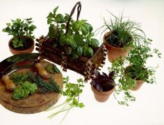 How to Layout a Herb Garden