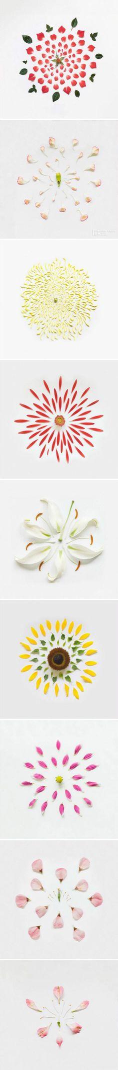 the petals~~