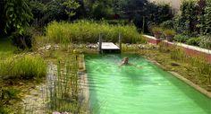 Bioteich Baignades Naturelles : leader de la piscine naturelle depuis 25 ans