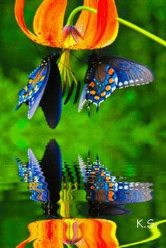 god, nature, butterflies, vibrant colors, orange flowers