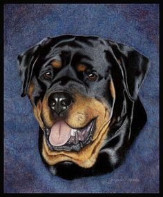 Rottweiler by wildlife and colored pencil artist Gemma Gylling