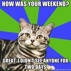 introvert cat - My weekend???  ...none of your damn business!!!!