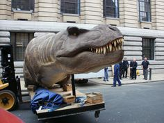 T.Rex - the Killer Question exhibition. T.Rex arriving at BMAG.