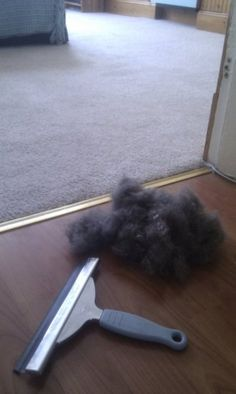 Who knew... A window squeegee removes pet hair from carpets. Gross but helpful!
