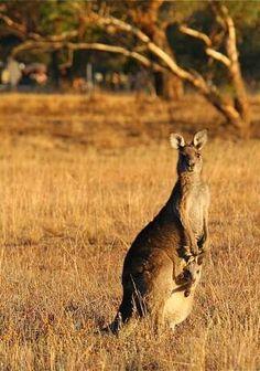 Photos of the Week: Animals of Australia