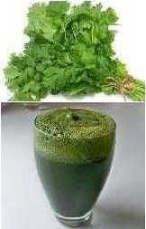 Coriander-Spinach-Nettle-Green-Juice-Healthy-Recipes-for-Juicer-for-Battling-Candida-Naturally