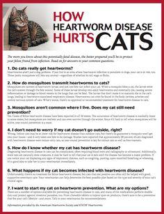 education feline heartworm prevention