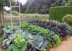 Cool crop veggie garden