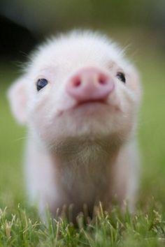 Gotta love them pigs...