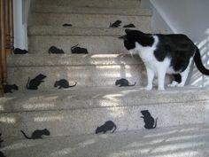 martha's mice