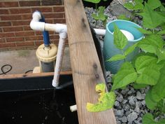 Aquaponics  is a sustainable food production system that combines a traditional aquaculture (raising aquatic animals such as snails, fish, crayfish or prawns in tanks) with hydroponics (cultivating plants in water) in a symbiotic environment.