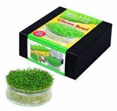 Tuinidee 2014 on pinterest tuin php and mini gardens - Allee tuin idee ...