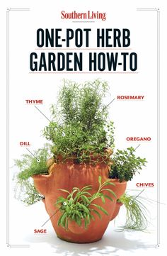 How To Grow Your Own One Pot Herb Garden. 3 gallon strawberry pot. Want to try.