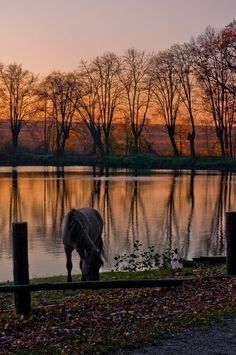 horse at sunset by the water