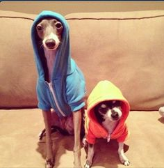 seriously one of my favorite pictures ever.  kermit & mr. marbles -- jenna marbles' dogs.