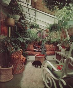 plant, cat, dream, sun porches, sitting rooms, vintage homes, greenhous, garden, green rooms
