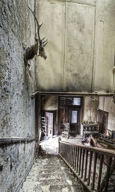 *beauty in decay*