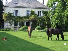 french living, hors, french country homes, country houses, front yards, dream life, backyard, dream houses, farm hous