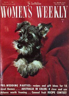 1963 Magazine Cover... Mini Schnauzer pup :)
