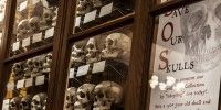 Adopt a Skull and Save a Collection That Helped Debunk Phrenology - I want to adopt a sailor skull... skulls, museums, initials, names, goth, mutter museum, christmas, display, sailor