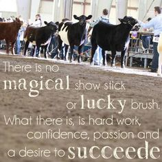 Beef 4 H Cattle Showing | The Big East: Jackpot  Youth Beef Cattle Show - West Springfield, MA ...