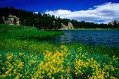 national forest black hills