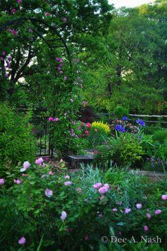 secret gardens, cottag garden, cottage gardens, gate garden, colors, dream garden, garden idea, cottages, lush garden