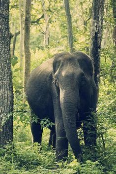*<3 Elephants