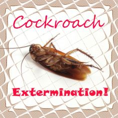 How to get rid of Cockroaches Naturally? Learn to kill roaches