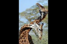 Photo of the Week   Thomson Safaris