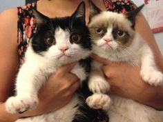 In this picture, Pokey is grumpy because he has realized that he will never be quite as grumpy as his brother, Grumpy Cat. In other words, Pokey is being meta-grumpy, which is impressive, and difficult to pull off while also frowning significantly.