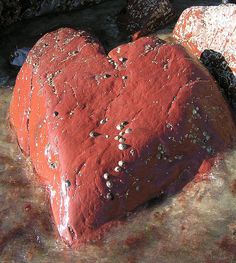 Amazing red heart rock on Caerfai beach Wales- This heart appeared as the tide went out, the shape was only visible for a very short time.
