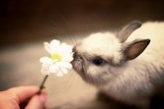Bunny sniffing Flower