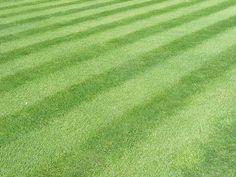 Make Your Yard Look Like Wrigley Field