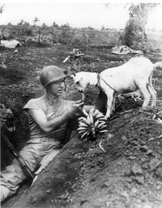 Battle of Saipan - Marine First Sergeant Neil I. Shober of Fort Wayne, Indiana, shares the spoils of war bananas with a native goat, 1944