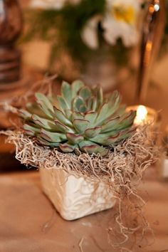 Great table decor.  Inexpensive idea and it could be a favor that the guests could take home as well!  Two birds, one stone :)