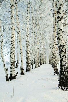 Gorgeous. #WinterTrees #TreePhotos #TREEmendous