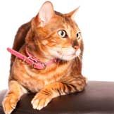Cancer isn't always preventable, but giving your cat a healthy lifestyle can help reduce the chance of illness! via petMD.com