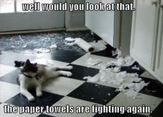 Well, would you look at that.  The paper towels are fighting again
