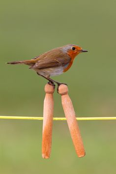 Robin On Stilts
