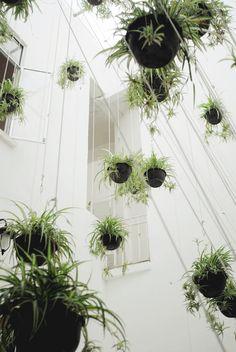 So viele pflanzen