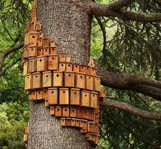 Birdhouses on the tree for all the birds who visit our backyard